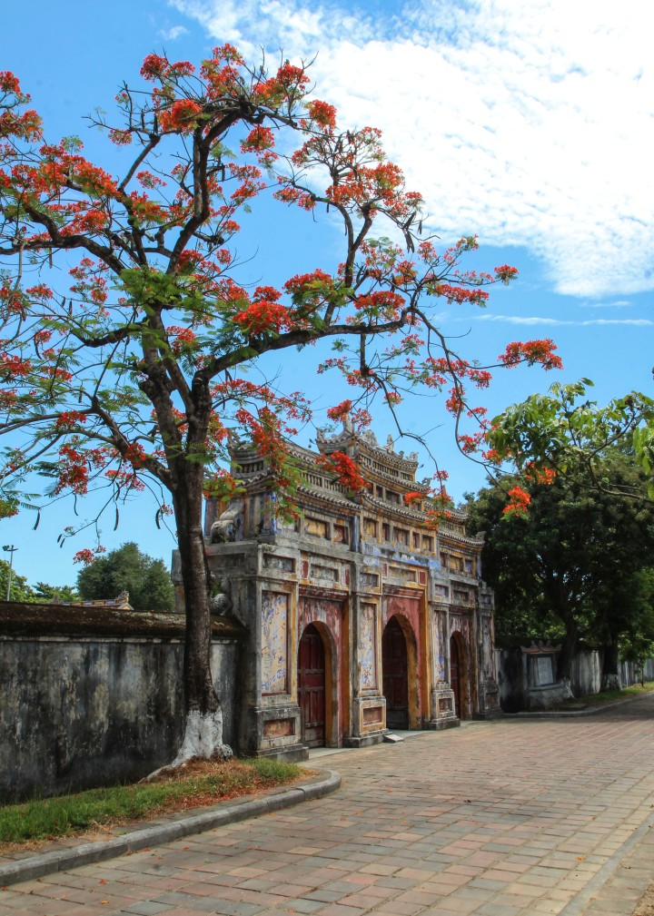 Tree and gate in the Imperieal Citadel, Hue, Vietnam