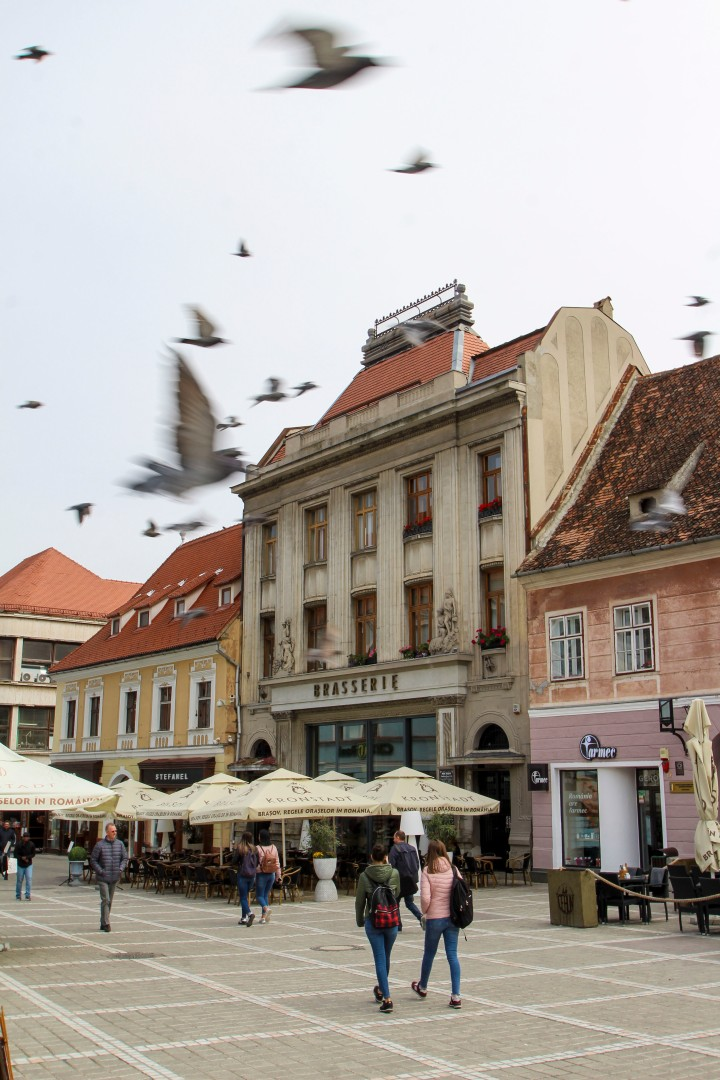 Pigeons in the Town Square in Brasov, Romania
