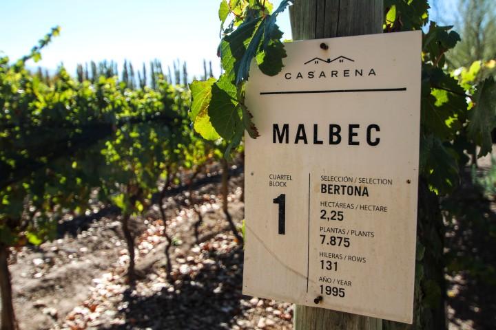 Malbec at Casarena, Mendoza, Argentina