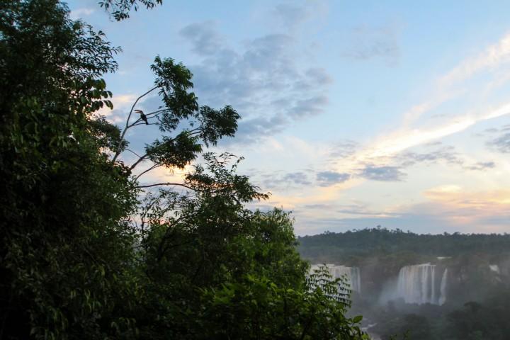 Toucan by the falls, Foz do Iguaçu, Brazil