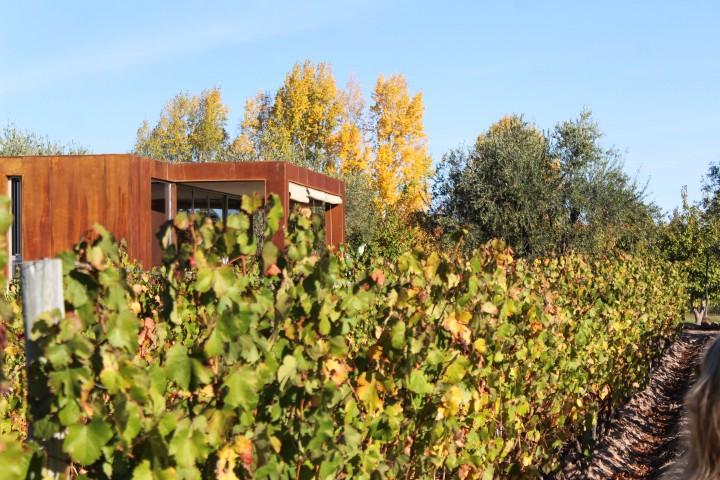 Vines at Entre Cielos, Mendoza, Argentina